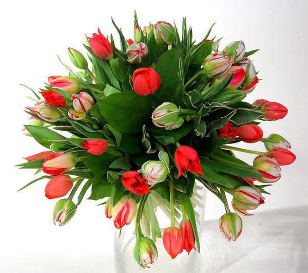 Цветы на белом фоне - цветы, gif, открытки